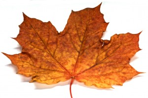 autumn-leaf2